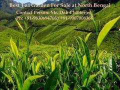 Tea Estate is for Sale with Great Price at North Bengal