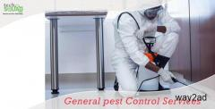 General Pest Control Services in Marathahalli Bangalore